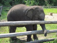 Thai Elephant Conservation Center in Lampang, Thailand