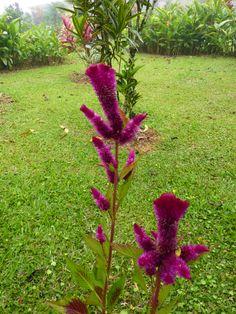 Strange flowers at Arenal.