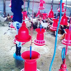 Poultry Equipment, Farmers, Mary, Instagram