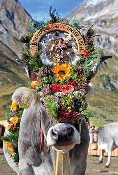 237 best Bauernhof Tiere images on Pinterest in 2018 | Cut animals ...