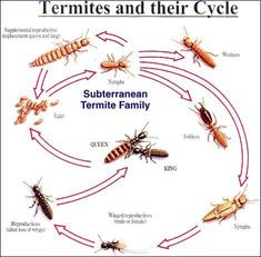 Did You Notice Termites On Your Beautiful, New Furniture? Are They Eating  Up Your Wooden Flooring And Your Almirah? Calling An U2026