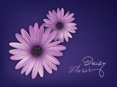 Daisy Flowers, DryIcons.com #daisy #decor #vector #design