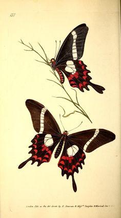 v.5 (1827) - The Naturalist's repository, or, Monthly miscellany of exotic…