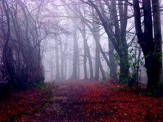 Chiltern woods by algo