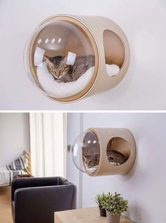 Inspired Cat Beds Are A Thing Now MYZOO have created the Spaceship Series, a line of fun and modern cat beds, plus one can be wall-mounted.MYZOO have created the Spaceship Series, a line of fun and modern cat beds, plus one can be wall-mounted. Pet Furniture, Furniture Ideas, Modern Cat Furniture, Modern Cat Beds, Luxury Furniture, Small Space Furniture, Trendy Furniture, Kids Bedroom Furniture, Business Furniture