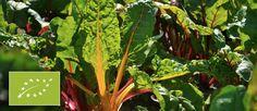 Descubre con #TuBiotienda el significado del #sello de #agricultura #ecológica, y la importancia de adquirir productos con esta #certificación. Sigue este y otros artículos en el blog de TuBiotienda. http://tubiotienda.com/blog/