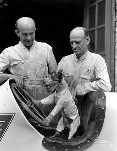Indy 500 crew chief Cotton Henning's dog ( a terrier) behind the wheel of an IndyCar.