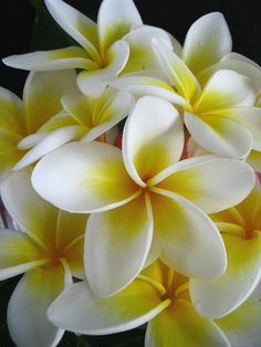 frangipani - always reminds me of Bali!