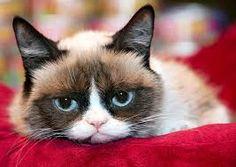 grumpy cat - Google 搜尋