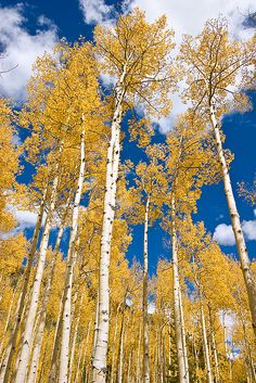 Colroado @ www.photographybyvarina.com/galleries/forests-and-prairie#
