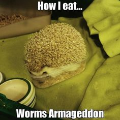 That's how I eat. Worms Armageddon #hedgehog #funny #eat #worms