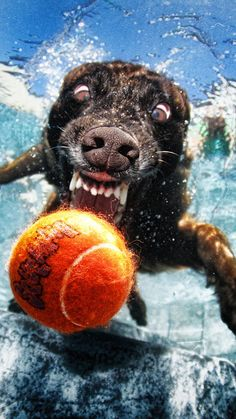 #Dog and ball in the water
