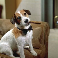 Eddie - Frasier  When Eddie the Jack Russell Terrier moved in with Fasier's dad, he stole the show with his adorable antics and impeccable comedic timing. He was a smart dog and would regularly taunt Frasier who made no attempt to hide his dislike of the funny dog, but the audience was captivated. The canine actor who played the role, Moose, received more fan mail than any of his human co-stars! When Moose retired after 10 years, his son Enzo took up where his talented father left off.