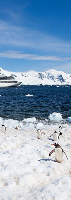 Sail with Seabourn on an ultra-luxurious cruise to Antarctica. See a part of the world where fascinating wildlife meets undeniable beauty. Glaciers and mountains shimmer under a timeless sky, providing you a chance to experience a land largely untouched by time. Experience the wonders of  South America and Antarctica on an ultra-luxurious Seabourn ship.