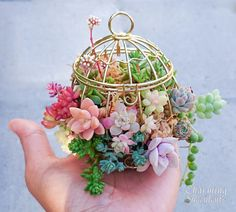 succulents growing in tiny gold birdcage