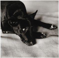 Peter Hujar, Clarissa Dalrymple's Dog, Kirsten, 1984