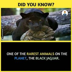 Wierd Facts, Wow Facts, Intresting Facts, Real Facts, Wtf Fun Facts, Funny Facts, Random Facts, Interesting Science Facts, Interesting Facts About World