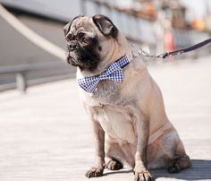 The Bow Tie Collar.  Because there's nothing cuter than a dog in a bow tie :)