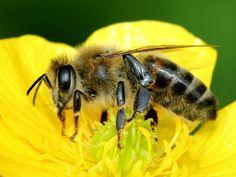 22 fleurs mellifères à planter dans son jardin pour sauver les abeilles