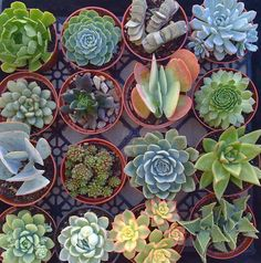 65 Ideas for large succulent centerpiece dish garden Succulents Wallpaper, Watercolor Succulents, Colorful Succulents, Hanging Succulents, Small Succulents, Succulents In Containers, Hanging Plants, Succulents Garden, Garden Plants