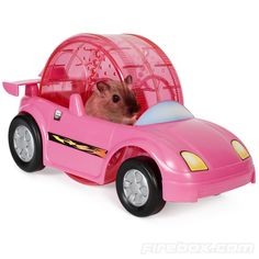 Hamster Racer Set- comes in different colors and a race track!!! Almost makes me want to get him a hamster!!