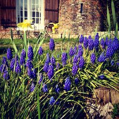 Cultivez votre côté fleur bleue...