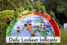 Lorikeet Barometer