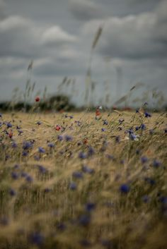 ahh beautiful field of flowers right before a storm. <3