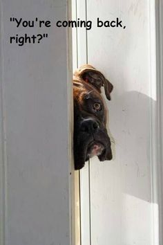 Boxers get lonely quick
