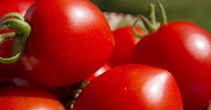 Canned tomatoes maintain their delicious flavor and color for up to a year. Here's a detailed guide on how to can tomatoes safely using the hot pack method. Pick Your Tomatoes The first step on how to can tomatoes is to choose the right ones. The main guiding factor to keep in mind here …