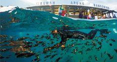 Makassar, Touring, Underwater, Sunrise, National Parks, Poster, Travel, Mice, Instagram