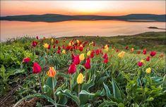 Опукский природный заповедник расположился на юго-восточном побережье Крымского полуострова. Занимаемая площадь заповедника составляет около 1600 га на суше и около 60 гектар прилегающей акватории Черного моря. В территориальный состав заповедника входят потрясающие ска�