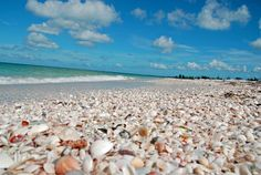 Collecting Shells. when I retire I want to live at the beach and collect sea shells.....the life.....<3