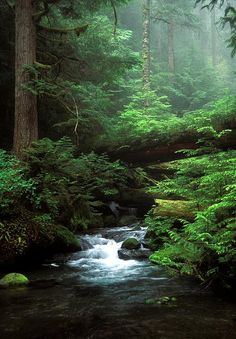 Typical scene in Washington State, Ennis Creek waterfall, Olympic National Park…