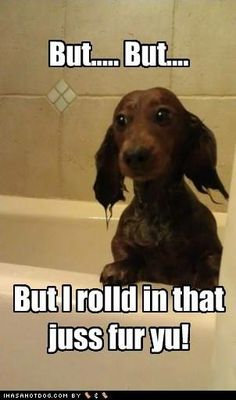 """Ha ha ha!!! This reminds me so much of Sparky. If he started to roll in something gross, all we had to say was, """"Do you want a bath?"""" and he would immediately stop. Of course, if we didn't catch him before he was in full roll mode the story would end with a bath."""