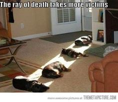 This looks exactly like our house!  Grabbin' a warm ray of sunshine anywhere they can!  :D