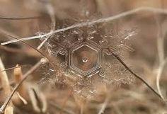 """Résultat de recherche d'images pour """"cristais de gelo"""""""
