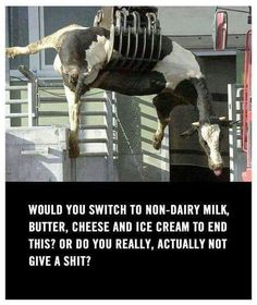 I apologize for the strong language. I normally wouldn't repin it, but this message -- this image -- is important. This is reality for animals around the world every day. It's not pretty to see, it's uncomfortable for you and me... think of how the animals feel.