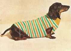 {sweater doxie}
