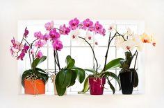 Coajă de banane pentru orhidei! - Pentru Ea Ficus, Glass Vase, Flowers, Design, Decor, Aloe Vera, Gardening, Sun, Plant