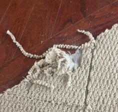 Call Today 678-860-2819. Carpet tears, holes, burns, rips, ripples or stains are not very pleasing to look at. At times they can be even embarrassing. They have even been known to create a fall hazzards in some homes. Dont wait any longer to fix your carpets damage, Atlanta Carpet Repair Expert is reasonably priced and affordable. atlantacarpetrepairexpert.simdif.com