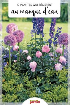 10 easy plants that resist water scarcity – Flower Garden Water Plants, Water Garden, Water Water, Pink Garden, Back Gardens, Outdoor Gardens, Water Scarcity, Garden Online, Front Yard Landscaping