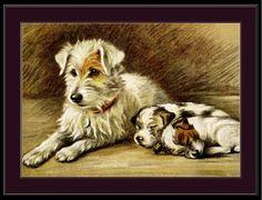 English-Picture-Print-Fox-Terrier-Puppy-Dog-Art