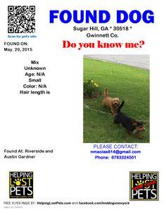 Found Dog - Mix - Sugar Hill, GA, United States