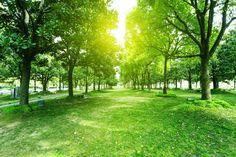 树,公园,路,绿色,森林_b528fe3a2_footpath and trees in park_创意图片_Getty Images China