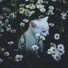 #flowers #cat