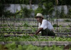 What we can learn from Cuba's agroecology | Star Tribune