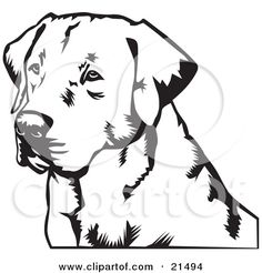 Clipart Illustration of a Labrador Retriever Dog's Face, Looking Off To The Left, On A White Background by David Rey