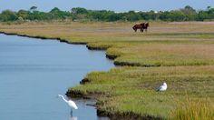 Wild ponies, Assateague Island, Maryland Ocean City Md, Herons, Romantic Getaways, Honeymoons, Ponies, Kayaking, Maryland, Animal Pictures, Travel Guide