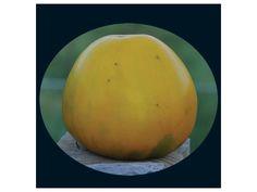 tomato, golden king of siberia | Baker Creek Heirloom Seed Co